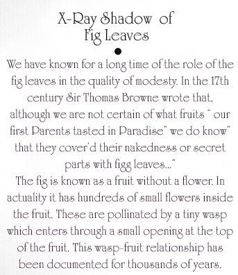 Two Fig Leaves Text