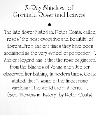 Grenada Rose and Leaves Text