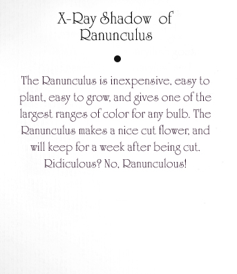 Ranunculus Text