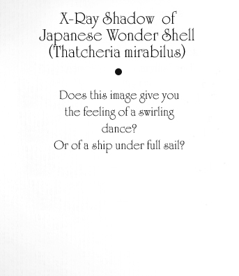 Japanese Wonder Shell Text